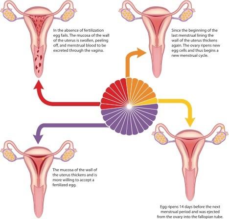 پریود بعد از مصرف قرص ضد بارداری اورژانسی